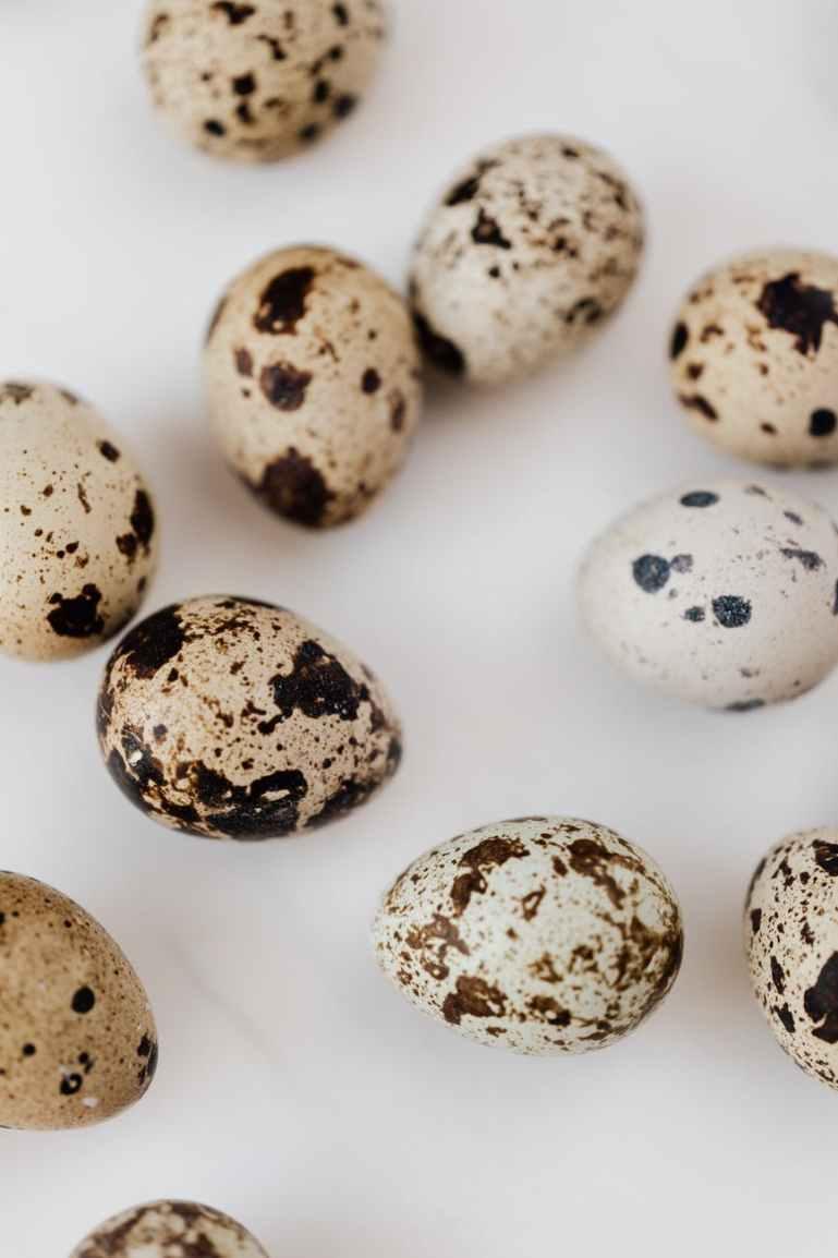 close up photo of quail eggs